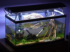 Tank Aquarium Air