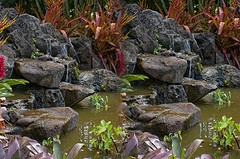 koi pond waterfalls