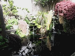 landscaping koi ponds